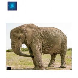 ACTILIA BLASON ELEPHANT 2