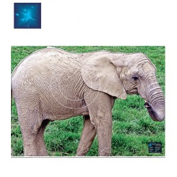 ACTILIA BLASON ELEPHANTEAU