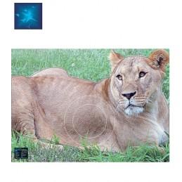 ACTILIA BLASON LIONNE