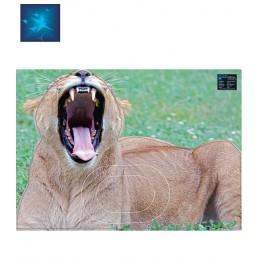 ACTILIA BLASON LIONNE 2