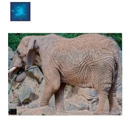 ACTILIA BLASON ELEPHANT 3