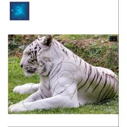 ACTILIA BLASON TIGRE BLANC 1