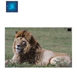 ACTILIA BLASON LION 4
