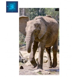 ACTILIA BLASON ELEPHANT 4