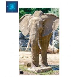 ACTILIA BLASON ELEPHANT 5