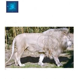 ACTILIA BLASON LION BLANC