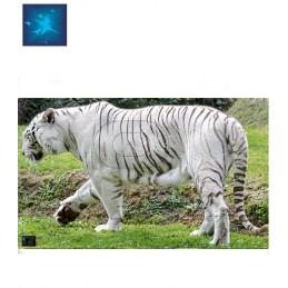ACTILIA BLASON TIGRE BLANC 3