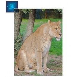 ACTILIA BLASON LIONNE 4