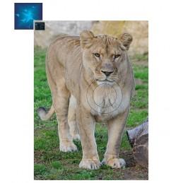 ACTILIA BLASON LIONNE 5