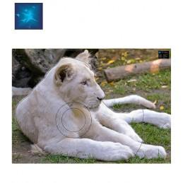 ACTILIA BLASON LIONNE...